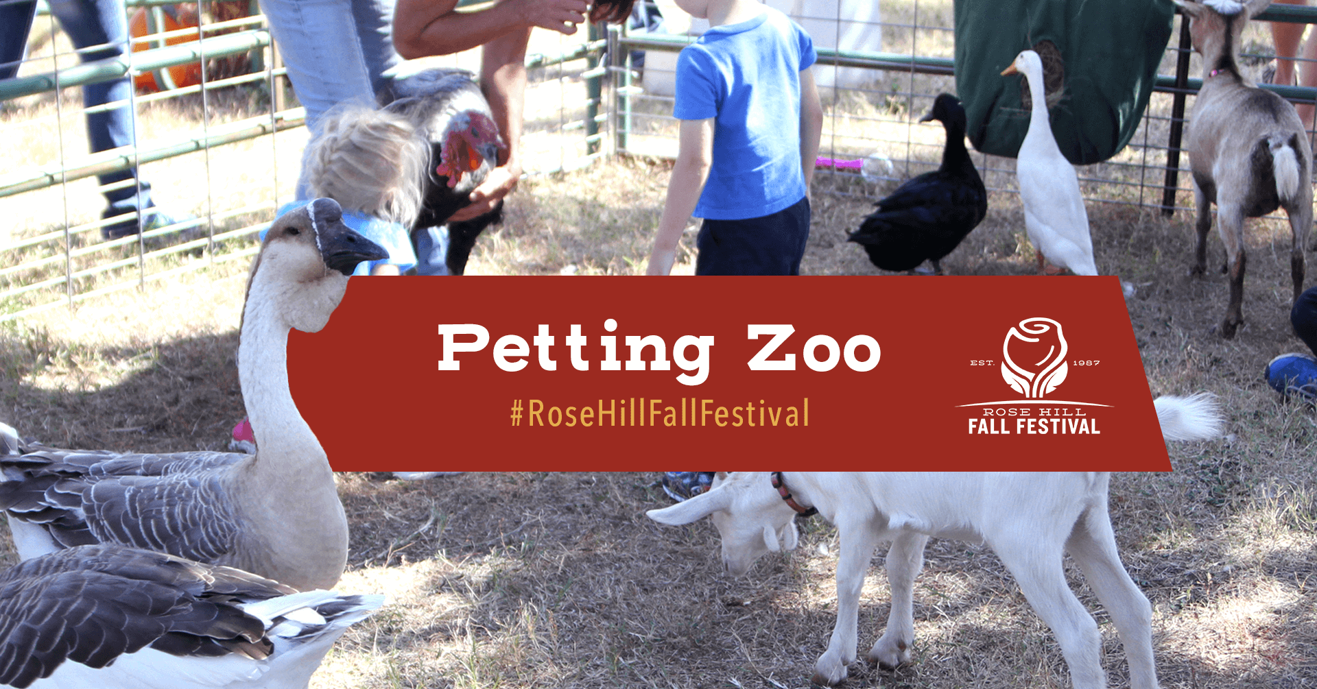Petting Zoo and Pony Rides